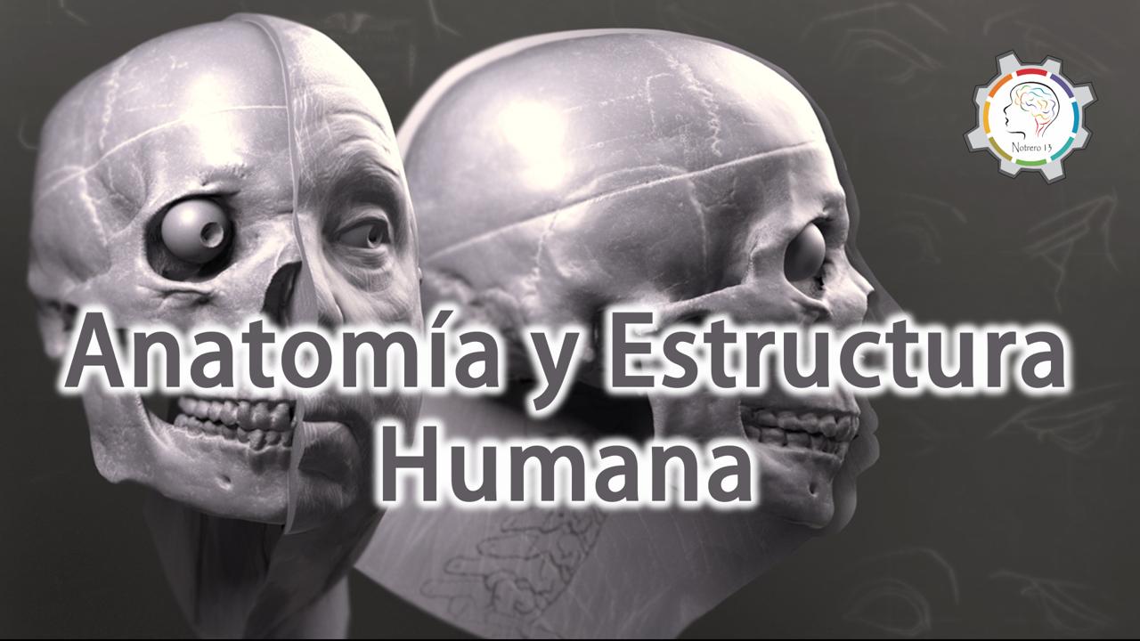 Anatomía Y Estructura Humana My Blog